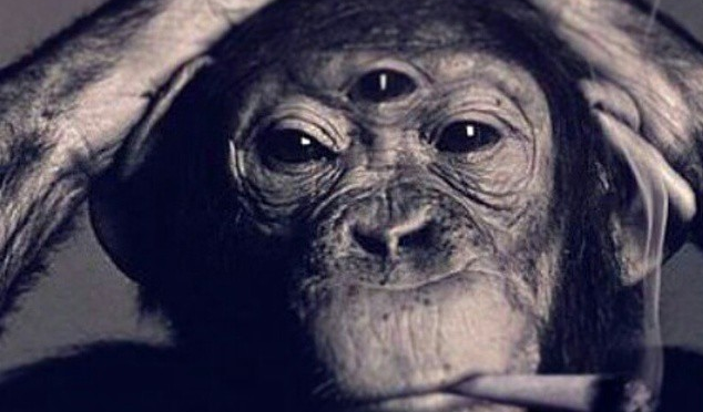 Human Zoo… Country of Apes.. (a blog by Jack)